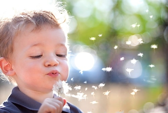 A Beautiful Little Boy Blowing Dandelion Seeds - Photo courtesy of ©iStockphoto.com/ZoneCreative, Image #10467139