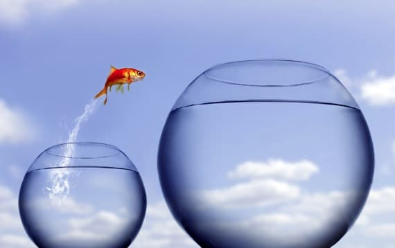 Goldfish Jumping from a Small Bowl to a Large One - Photo courtesy of ©iStockphoto.com/mikdam, Image #5754119