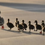 Why the Best Leaders Are Great Followers