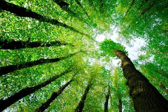 Surrounded by Oak and Lime Trees - Photo courtesy of ©iStockphoto.com/AVTG, Image #10807364