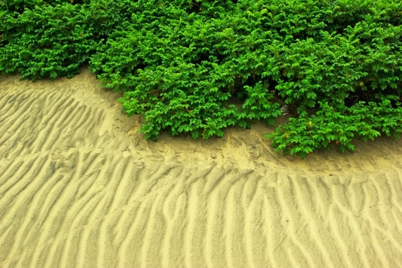 Luch bushes and sand - Photo courtesy of ©iStockphoto.com/Vladimirovic, Image #4161005