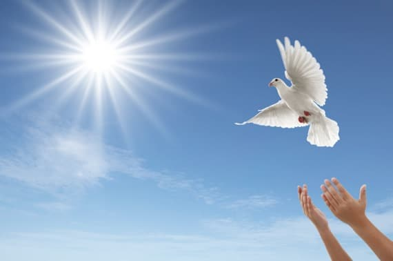 A Dove Being Released into the Air - Photo courtesy of ©iStockphoto.com/Okea, Image #9658113