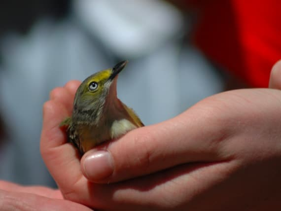A Small Bird in a Boys Hand - Photo courtesy of ©iStockphoto.com/pelicankate, Image #1926891