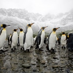 How Penguin Leadership Will Change Your Team Culture