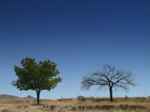 Two Trees: One Dead and One Alive