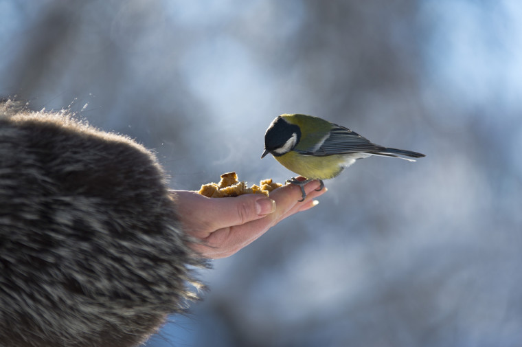 A bird eating out of someone's hand