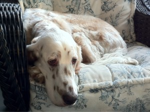 My Dog Nelson